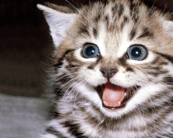 30 Cute Smiling Cat Pictures 2