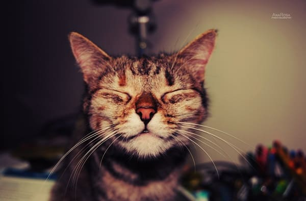30 Cute Smiling Cat Pictures 22