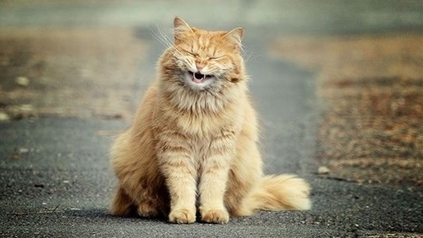30 Cute Smiling Cat Pictures 26