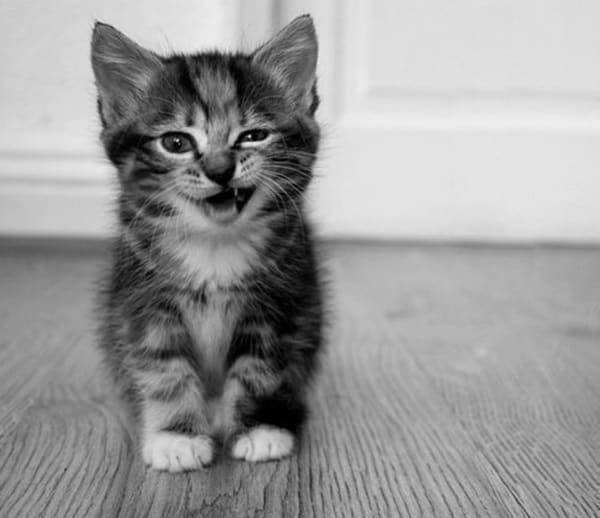 30 Cute Smiling Cat Pictures 4