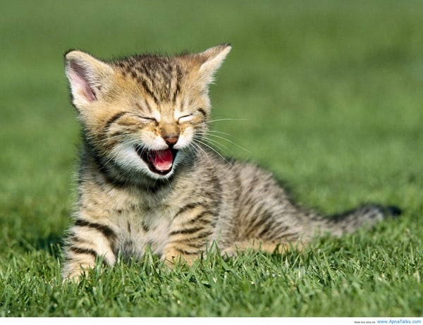 30 Cute Smiling Cat Pictures 9