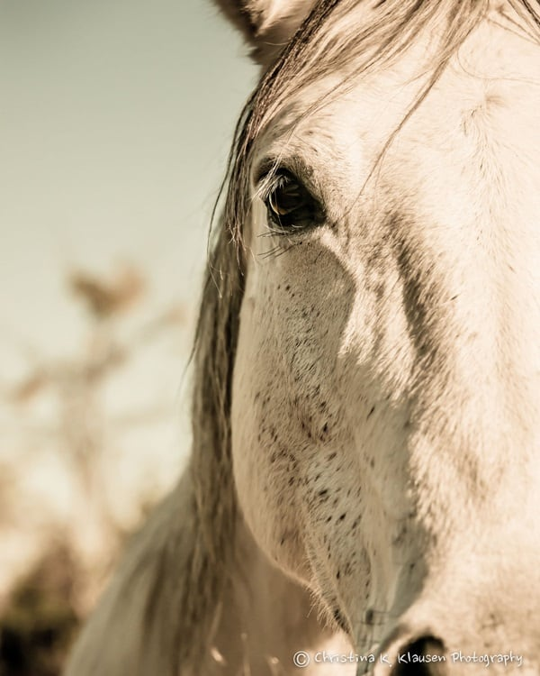 40 Beautiful Pictures of Horse Photography 10