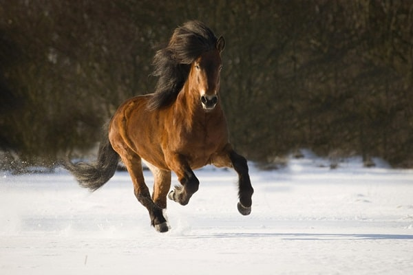 40 Beautiful Pictures of Horse Photography 12