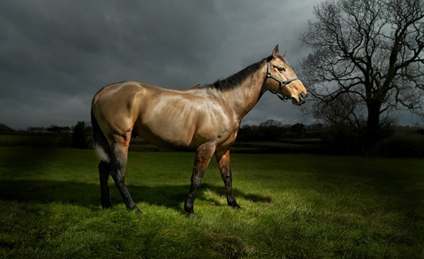 40 Beautiful Pictures of Horse Photography 13