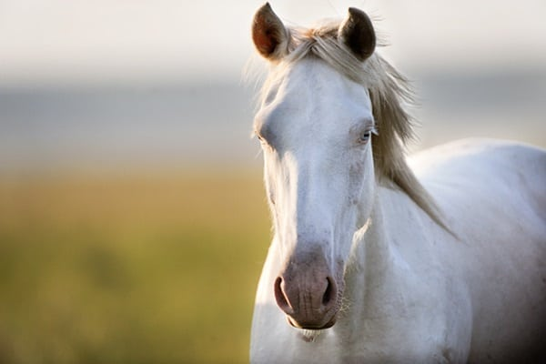40 Beautiful Pictures of Horse Photography 15