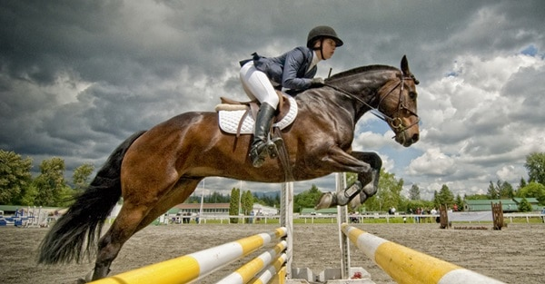 40 Beautiful Pictures of Horse Photography 16
