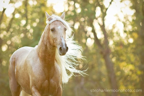 40 Beautiful Pictures of Horse Photography 23