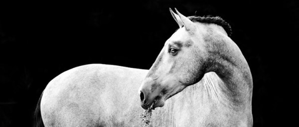 40 Beautiful Pictures of Horse Photography 24