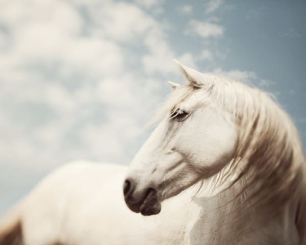 40 Beautiful Pictures of Horse Photography 26