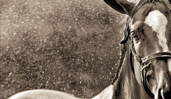 40 Beautiful Pictures of Horse Photography 27