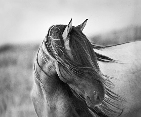 40 Beautiful Pictures of Horse Photography 30