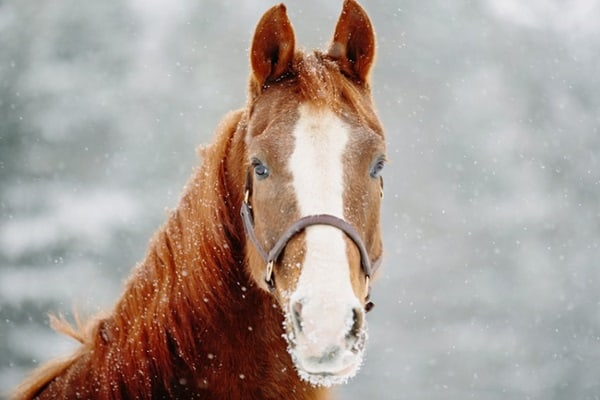 40 Beautiful Pictures of Horse Photography 31