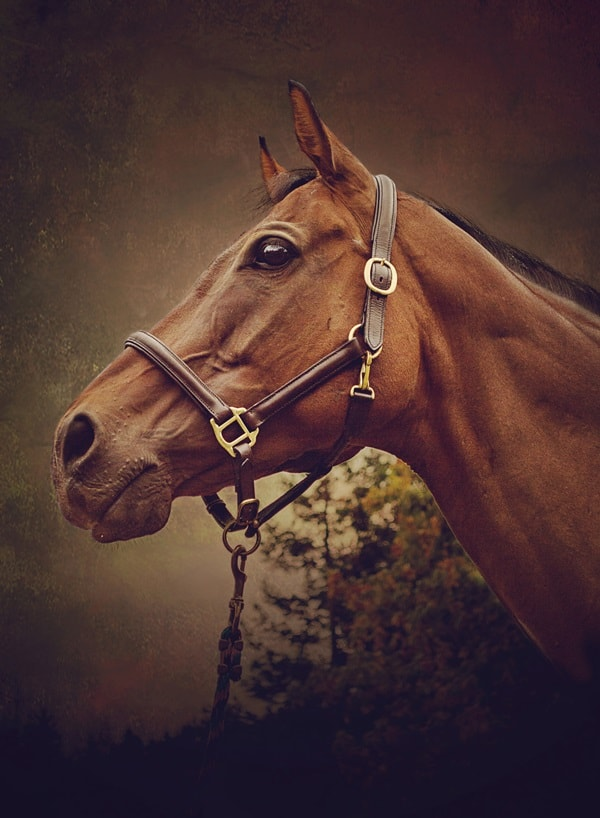 40 Beautiful Pictures of Horse Photography 32