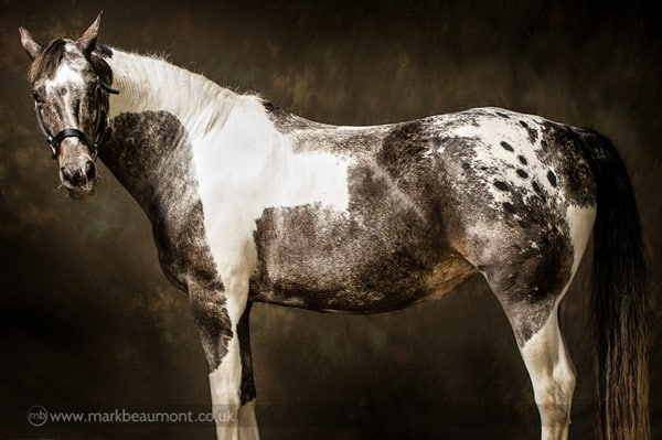 40 Beautiful Pictures of Horse Photography 33