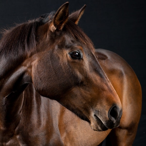 40 Beautiful Pictures of Horse Photography 34