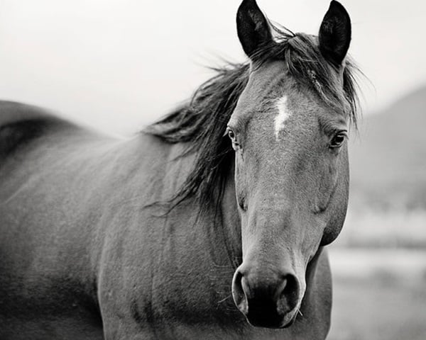 40 Beautiful Pictures of Horse Photography 35