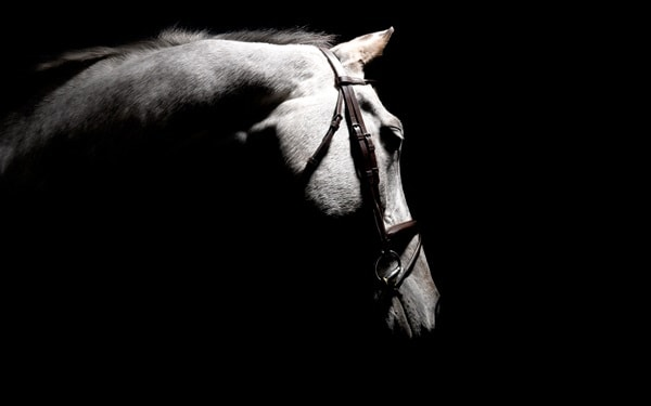 40 Beautiful Pictures of Horse Photography 37