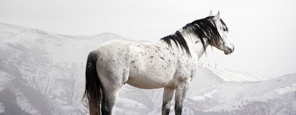 40 Beautiful Pictures of Horse Photography 39