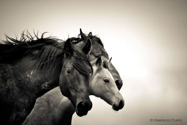 40 Beautiful Pictures of Horse Photography 4