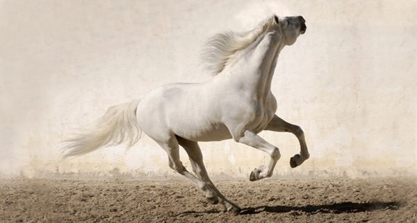 40 Beautiful Pictures of Horse Photography 6