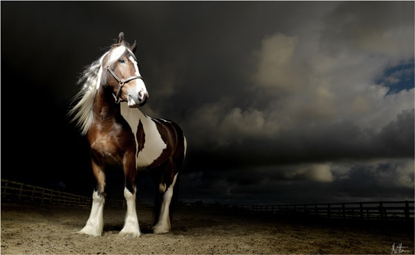 40 Beautiful Pictures of Horse Photography 7