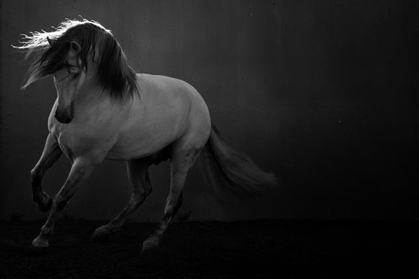 40 Beautiful Pictures of Horse Photography 9