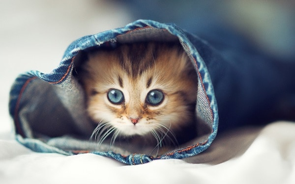 40 Beautiful and Cute Kitten Pictures 1