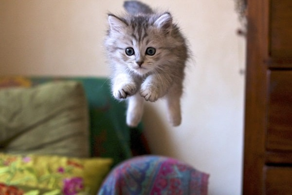 40 Beautiful and Cute Kitten Pictures 11