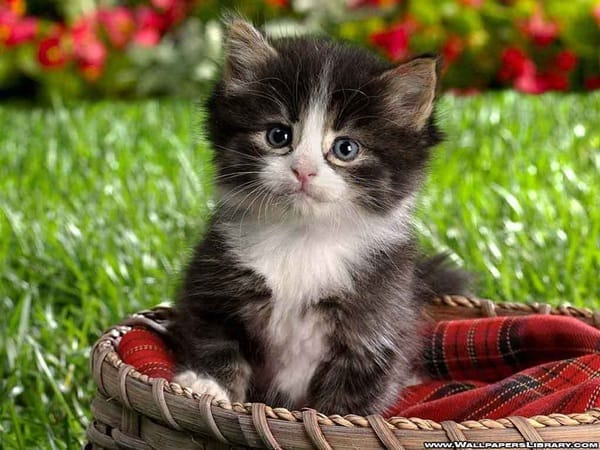 40 Beautiful and Cute Kitten Pictures 12