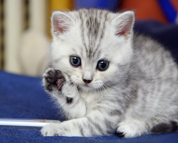 40 Beautiful and Cute Kitten Pictures 2
