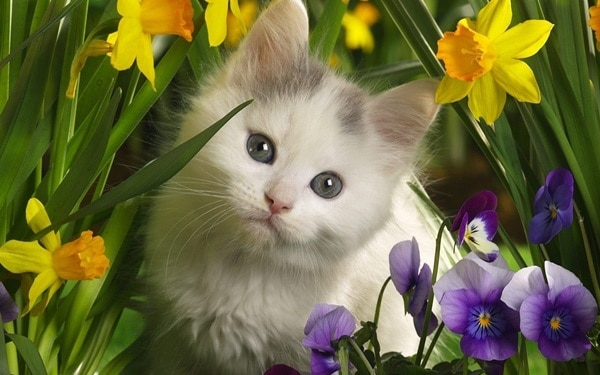 40 Beautiful and Cute Kitten Pictures 21