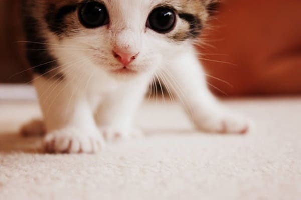 40 Beautiful and Cute Kitten Pictures 23