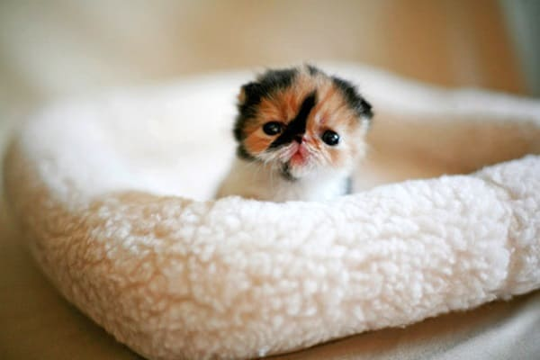 40 Beautiful and Cute Kitten Pictures 24