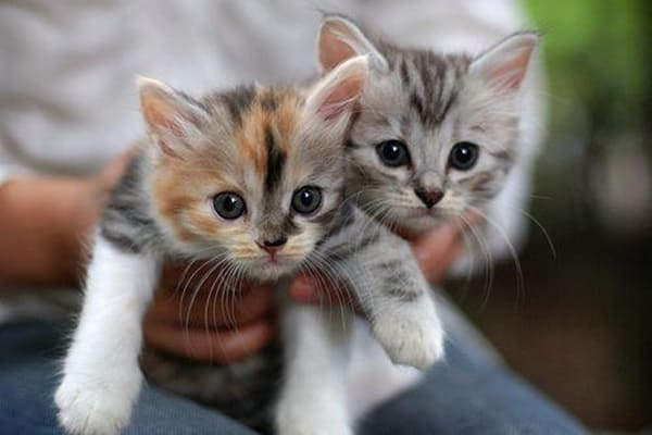 40 Beautiful and Cute Kitten Pictures 25