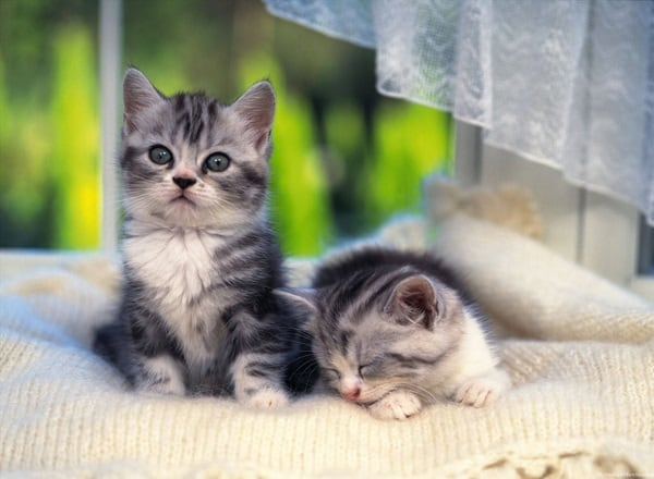 40 Beautiful and Cute Kitten Pictures 26