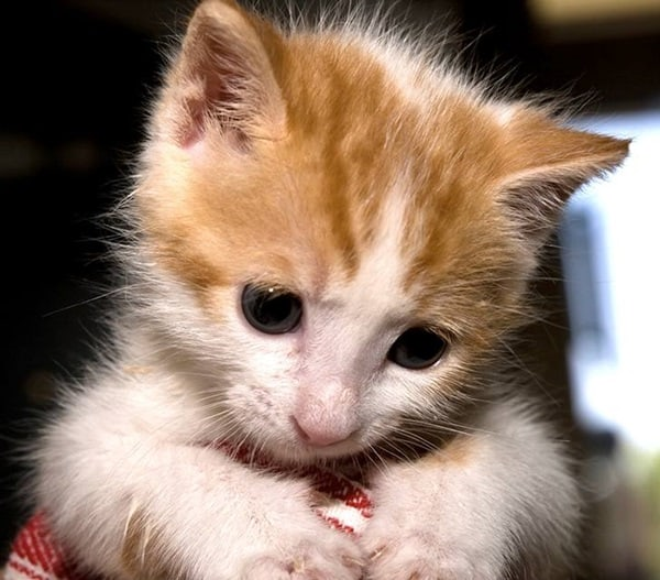 40 Beautiful and Cute Kitten Pictures 27