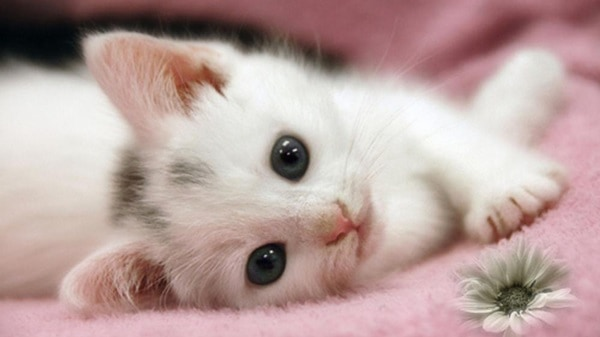 40 Beautiful and Cute Kitten Pictures 3