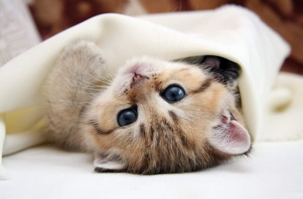 40 Beautiful and Cute Kitten Pictures 31