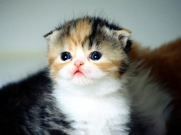 40 Beautiful and Cute Kitten Pictures 34