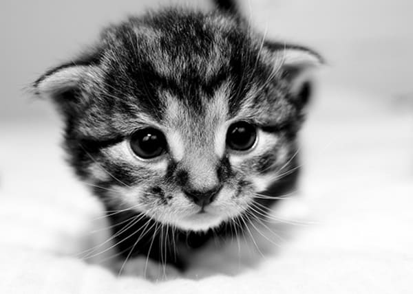 40 Beautiful and Cute Kitten Pictures 38