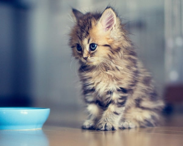 40 Beautiful and Cute Kitten Pictures 39