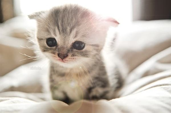 40 Beautiful and Cute Kitten Pictures 4