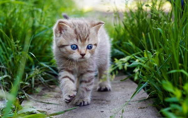 40 Beautiful and Cute Kitten Pictures 40
