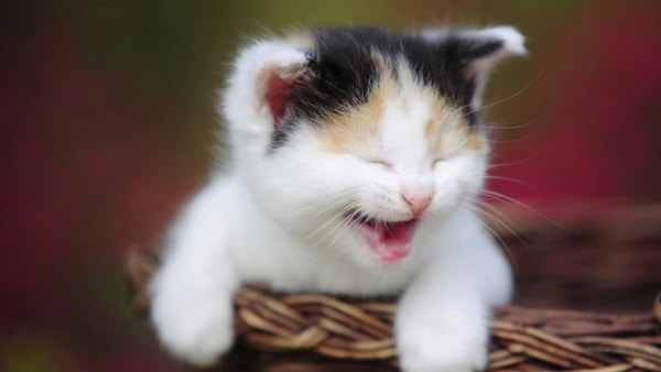 40 Beautiful and Cute Kitten Pictures 5