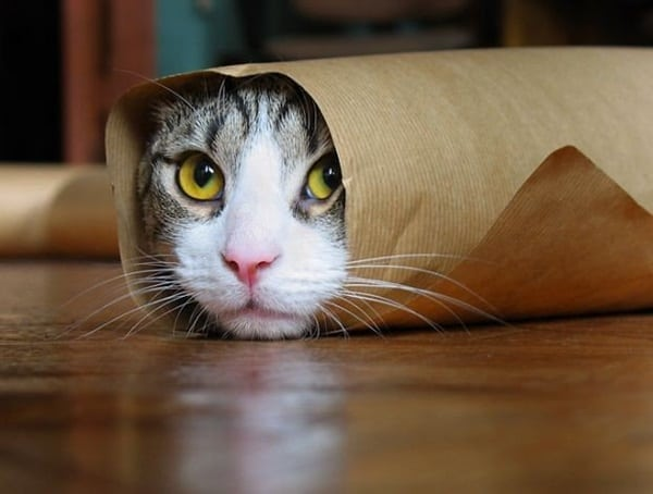 40 Pictures of Animal Playing Hide and Seek 1