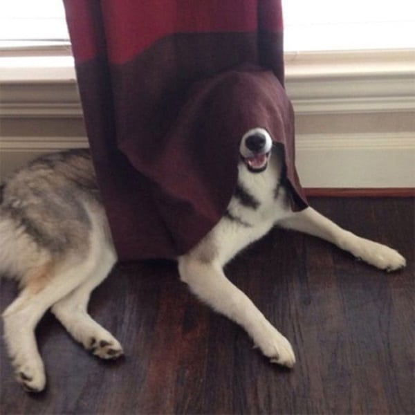 40 Pictures of Animal Playing Hide and Seek 10