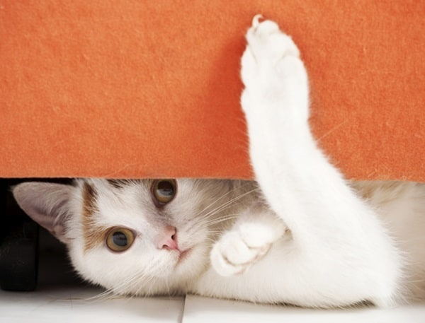 40 Pictures of Animal Playing Hide and Seek 12