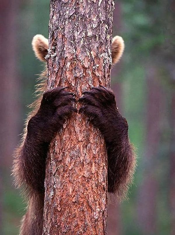40 Pictures of Animal Playing Hide and Seek 2