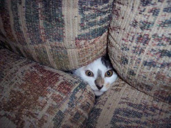 40 Pictures of Animal Playing Hide and Seek 26