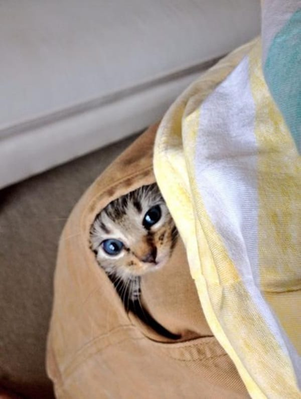 40 Pictures of Animal Playing Hide and Seek 27
